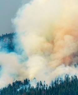 Clouds of smoke of a wildfire, Yosemite National Parkの写真素材 [FYI02340296]