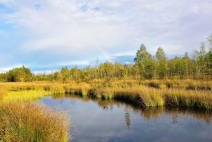Rainbow over autumnal moor with a pond and club-rushesの写真素材 [FYI02340384]