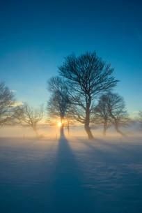Wind-bent beeches at sunset in winter, Schauinsland, nearの写真素材 [FYI02340389]