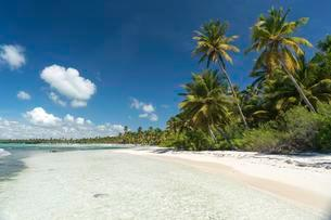Dream beach, sandy beach with palm trees and turquoise seaの写真素材 [FYI02340403]