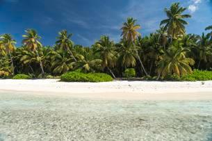 Dream beach, sandy beach with palm trees and turquoise seaの写真素材 [FYI02340423]