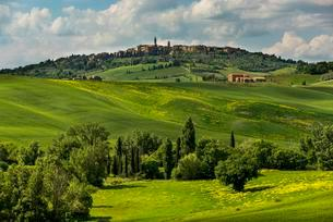 Tuscan landscape, rapeseed and corn fields, San Quiricoの写真素材 [FYI02340427]