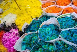 Colorful bouquets, Yodpiman Flower Market, Bangkokの写真素材 [FYI02340468]