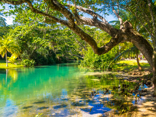 Freshwater river, at Frenchmans Cove, Drapers, Portlandの写真素材 [FYI02340547]