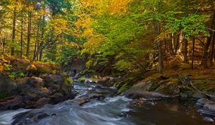 Yamaska River in autumn, Eastern Townships, Quebec, Canadaの写真素材 [FYI02340607]