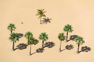 Palms on the beach, Playa de las Teresitas, San Andresの写真素材 [FYI02340611]