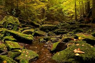 Landscape in Monbachtal in Bad Liebenzell, Black Forestの写真素材 [FYI02340631]