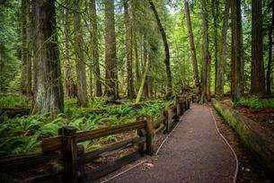 Cathedral Grove, Pacific Rim National Park, Vancouverの写真素材 [FYI02340646]