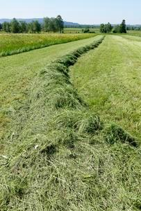 Haymaking, mowing the spring meadows with fresh cut grassの写真素材 [FYI02340689]