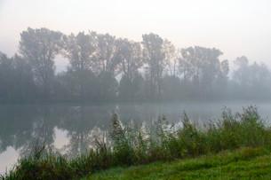 Foggy morning on the Alter Rhein, Bislicher Insel, Xantenの写真素材 [FYI02340711]
