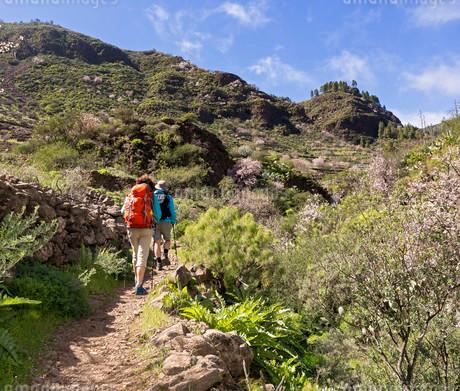 Hikers in the Barranco de Guayadeque canyon, near Aguimesの写真素材 [FYI02340717]