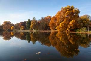 Trees with autumn leaves with reflection on the waterの写真素材 [FYI02340729]