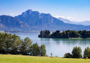Forggensee, lake, Sauling and Neuschwanstein Castleの写真素材 [FYI02340765]