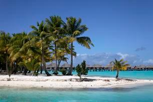 Small peninsula with coconut palms in the turquoise seaの写真素材 [FYI02340824]
