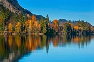 Colorful autumn landscape, reflection in the Walchenseeの写真素材 [FYI02340843]