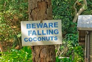 Warning sign on palm tree stating Beware Falling Coconutsの写真素材 [FYI02340870]
