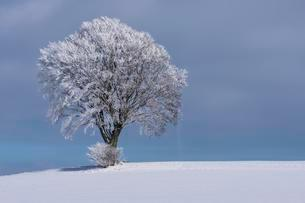 Deciduous tree with hoarfrost and snow, winter landscape inの写真素材 [FYI02340873]
