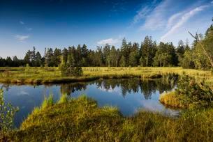Wildseemoor, between Bad Wildbad and Gernsbach, Blackの写真素材 [FYI02340882]