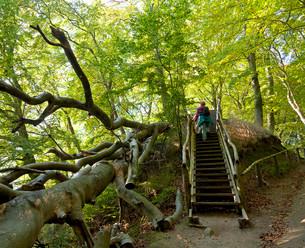 At Herthasee, Jasmund National Park, Rugenの写真素材 [FYI02340908]