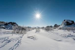 Sun shining on snowy bushes, lava field covered in snowの写真素材 [FYI02340918]