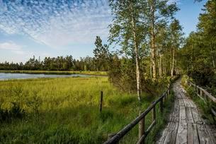 Wooden path, Wildseemoor, between Bad Wildbad andの写真素材 [FYI02340932]