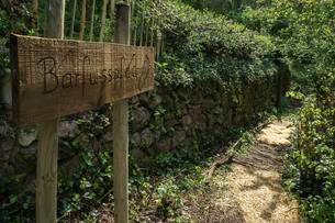 Barefoot path in the vineyards at Schriesheimの写真素材 [FYI02340942]