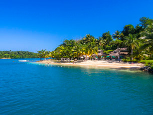 Caribbean beach with palm trees, Erol Flynn Marina, Portの写真素材 [FYI02340957]