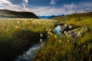 Cotton Grass (Eriophorum) with stream and mountain peaksの写真素材 [FYI02340971]