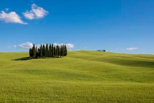 Mediterranean Cypresses (Cupressus sempervirens) and aの写真素材 [FYI02341094]