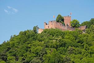 Castle ruin Landeck, Klingenmunster, German Wine Route orの写真素材 [FYI02341100]