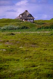 Typical Frisian house, thatched cottage on dunes ofの写真素材 [FYI02341181]