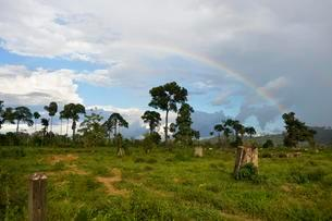 Deforested area in the rainforest for use as pasture withの写真素材 [FYI02341193]