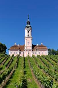 Birnau pilgrimage church with vineyardの写真素材 [FYI02341227]