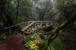 Hiking trail with bridge in fog forest, laurel forest, Rayaの写真素材 [FYI02341270]