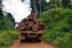 Trucks loaded with tree trunks, illegal logging, Amazonの写真素材 [FYI02341271]