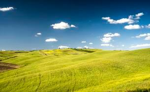 Cornfields in spring, at San Quirico d'Orcia, Valの写真素材 [FYI02341308]