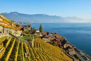 Vineyards in autumn, view of Lake Geneva and winegrowingの写真素材 [FYI02341314]