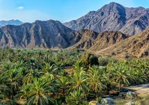 Oasis with palm trees in the Hajar Mountains, Fujairahの写真素材 [FYI02341359]