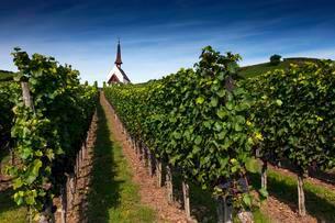 Eichert Chapel in the vineyards, Jechtingen, Kaiserstuhlの写真素材 [FYI02341361]