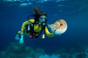 Scuba diver watching a Palau Nautilus (Nautilusの写真素材 [FYI02341364]