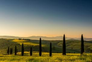 Tuscan landscape with cypress trees and rape field, Sanの写真素材 [FYI02341442]