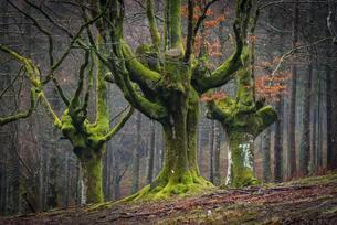 Gorbea Natural Park, Parque natural de Gorbea, Gorbeiaの写真素材 [FYI02341459]