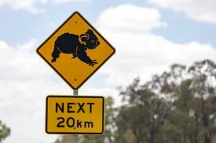 Warning sign, warning of koalas, coastal road A1のイラスト素材 [FYI02341594]