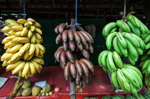 Fruit stall with bananas, Central Province, Sri Lanka, Asiaの写真素材 [FYI02341598]