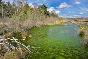 Silted moor pond with moss (Sphagum sp.) and bulrushesの写真素材 [FYI02341637]