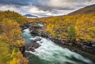 Abisko Canyon in autumn, River Abiskojakka, Abiskojokkの写真素材 [FYI02341711]