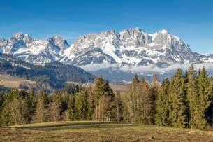 Forest in front of massif Wilder Kaiser with snow, nearの写真素材 [FYI02341750]