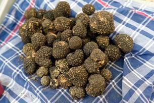 Black Truffle, Truffle Fair, Alba County, Piedmont, Italyの写真素材 [FYI02341769]