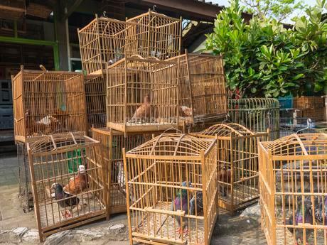 Pigeons in cages, bird market, Yogyakarta, Java, Indonesiaの写真素材 [FYI02341844]