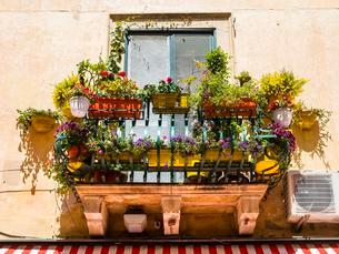 Balcony arrayed with colorful flowers, Piazza Duomoの写真素材 [FYI02341853]